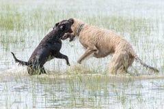 and Irish Wolfhound do...