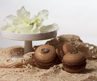 Chocolate macarons. Brown chocolate macarons on lace fabric with flower on tray on the stem Stock Images