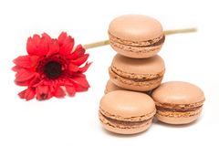 Chocolate macaroons Stock Images