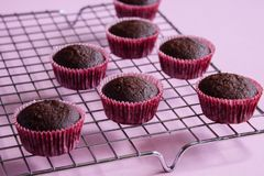 Chocolate mini cupcakes on rack. stock image
