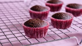 Chocolate mini cupcakes royalty free stock photography