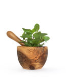 Chocolate Mint Herb Royalty Free Stock Photography