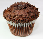 Chocolate Muffin. Close up shot of one chocolate chip muffin Stock Photos
