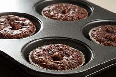 Chocolate muffin in baking tray Stock Images