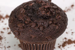 Chocolate Muffin with Cocoa Powder. Chocolate Muffin close on white plate with cocoa powder stock photography
