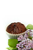 Chocolate Muffin with lilac Royalty Free Stock Photo