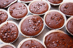 Chocolate muffins Stock Photography