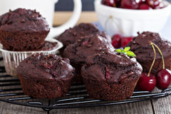 Chocolate muffins with cherry Stock Image