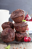 Chocolate muffins with cherry Stock Photos