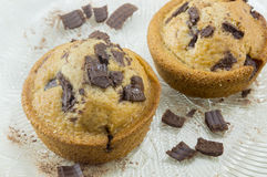 Chocolate muffins decorated with chocolate and coconut on a plat Royalty Free Stock Images