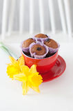 Chocolate muffins with raisins in red lying next to the cup. And yellow daffodils Royalty Free Stock Image