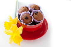 Chocolate muffins with raisins in red lying next to the cup. And yellow daffodils Stock Images