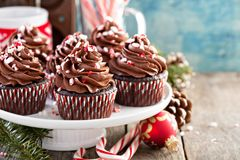 Chocolate peppermint cupcakes with candy cane. Crumbs Royalty Free Stock Photography