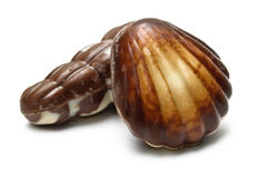 A chocolate periwinkle and mollusk Stock Photo