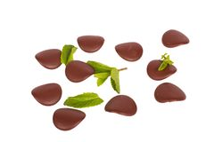 Chocolate petals with mint leaves Stock Images