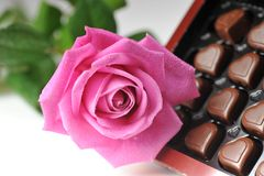 Chocolate  and pink rose Stock Photography