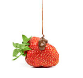 Chocolate is poured on strawberries isolated Stock Images