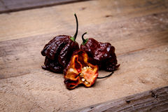 Chocolate Primo Reaper - Super Hot Pepper Royalty Free Stock Photos