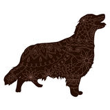 Chocolate Retriver Stock Images