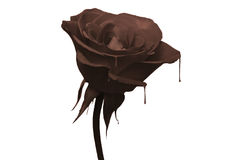 Chocolate rose Royalty Free Stock Photos