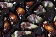 Chocolate sea shells stock image