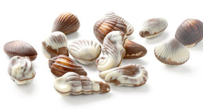 Chocolate Seashell Truffles Stock Photography