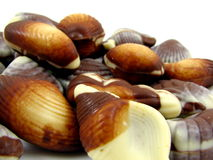 Chocolate Seashells. Macro photo of dark and white blended chocolate seashells Royalty Free Stock Photos