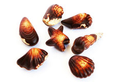 Chocolate seashells Stock Image