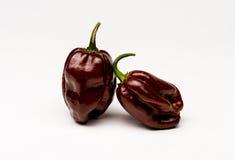 Chocolate Senegal Hot Peppers Stock Photos
