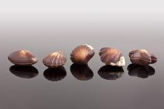 Chocolate shells. Belgian chocolate speciality Royalty Free Stock Photos