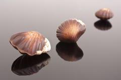Chocolate shells. Belgian chocolate speciality Royalty Free Stock Photo