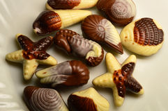 Chocolate sob a forma das criaturas e dos shell do mar Imagens de Stock