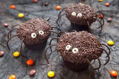 Chocolate spider cupcakes for Halloween party Stock Photography