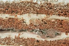 Chocolate Sponge Cream Cake royalty free stock image