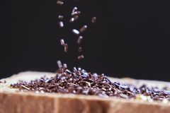 Chocolate sprinkles on a sliced bread royalty free stock photo