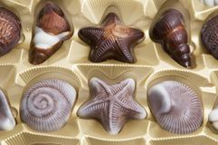 Chocolate sweets. Chocolate candies formed as different seashells Stock Photos