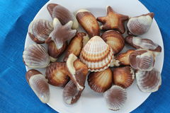 Chocolate sweets and seashells. Top view of several chocolates on white plate in forms of seashells and several seashells Stock Images
