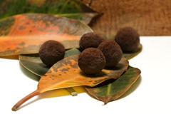 Chocolate truffle. Of manual work Stock Photo