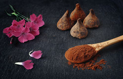 Chocolate truffles.  Cacao powder pure. Stock Photo