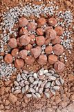 Chocolate truffles and cocoa beans in cocoa. Inside, indoors, interiors, food, nutrition, nourishment, candy, confections, confectionery, cacao, seeds, sweet stock photography