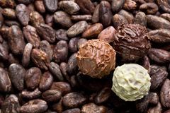 Chocolate truffles on cocoa beans Royalty Free Stock Image