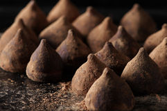 Chocolate truffles with cocoa powder Stock Photography