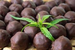 Chocolate truffles with marijuana. Bunch of homemade chocolate truffles with marijuana leaves stock photo