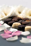 Chocolate truffles and rose petals 03 Royalty Free Stock Images