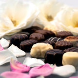 Chocolate truffles and white rose petals close up Stock Images