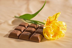 Chocolate and tulip. Nine little chokolate bars with beautiful yellow tulip Stock Image