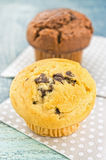 Chocolate and vanilla muffins Royalty Free Stock Photos