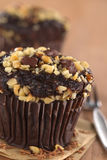 Chocolate and Walnut Muffin royalty free stock photos