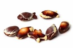 Chocolates belgas del shell del mar Imágenes de archivo libres de regalías