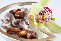 Chocolates and Cymbidium orchid Royalty Free Stock Photos